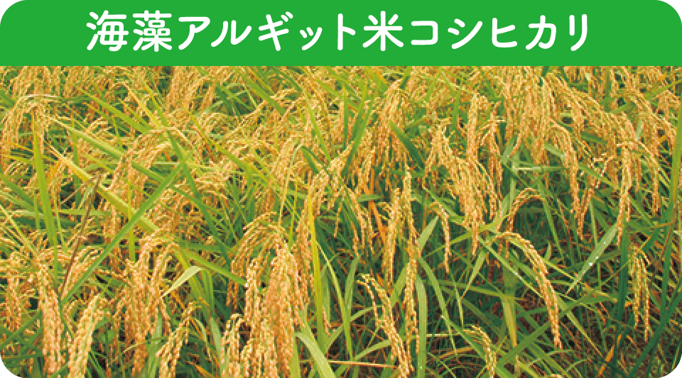 in-p_rice_title